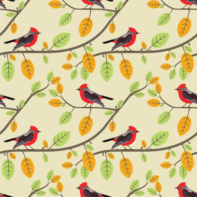 Kuşların Güzellik Yarışması